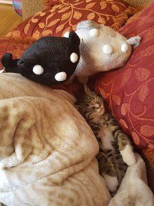 pim pom knuffels